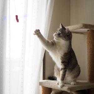 猫じゃらしと爪とぎ、どっちが好きなの?