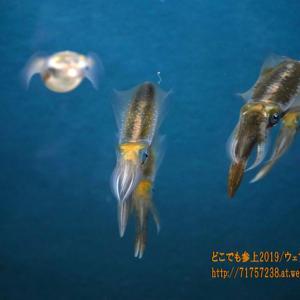 """魚津水族館の生き物たち!富山湾にふさわしい生き物""""総選挙""""って・・・"""