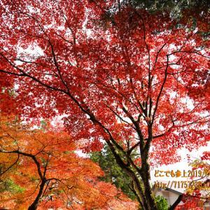 """立山町芦峅寺の""""教算坊""""の紅葉2019、紅葉のピークは過ぎていたが、落ち葉とコラボ!"""
