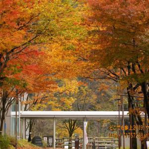 富山地方鉄道「立山駅」の紅葉2019、残った紅葉でも十分感動出来た美しさ!