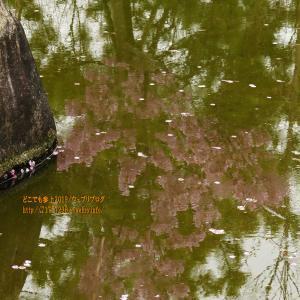 枝垂れ桜もあった・・・、黒部市総合公園の散歩