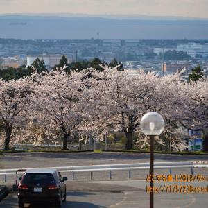 ももクロの聖地 「宮野運動公園」のサクラ2020、高台にあるこの風景