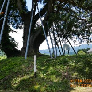 魚津市の「大沢の地鎮杉」に足を伸ばす。不安要素は皆無に!