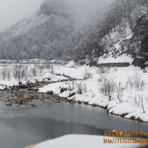 雪積もる中、サル 出現!! 魚津市 片貝川流域を行く!