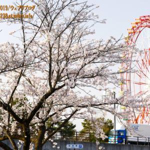 魚津の桜2021、鴨川沿いと「魚津総合公園(ミラパーク)」の桜!