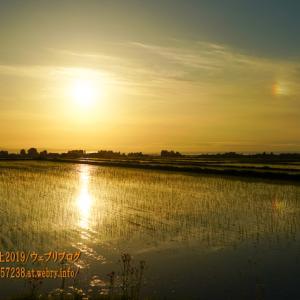舟見の麦畑と幻日、春というより秋のような風景