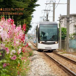 タチアオイの風景を「サントラム」が行く!「富山地方鉄道富山港線」(元ライトレール)