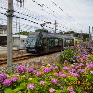 アジサイの風景を「セントラム」が行く!「富山地方鉄道富山港線」(元ライトレール)