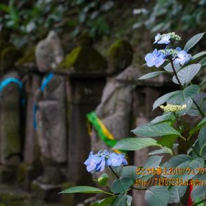 「呉羽山展望台」と「富山市民俗民芸村」を歩く!五百羅漢のアジサイも見た!