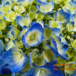 天神山ガーデンの色付きは続く!この時期の花は網羅!