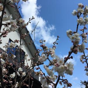 3月のバレエレッスン・ポイント ~通りのいい体作り~ 花粉症、コロナ対策にも