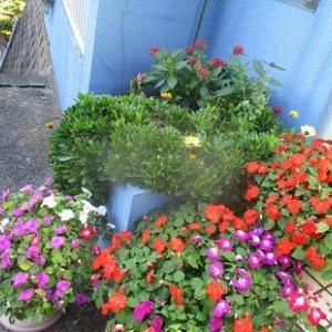 玄関デビューを待っている花たち