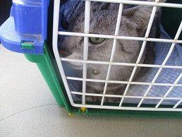 ルイちゃん、病院へ