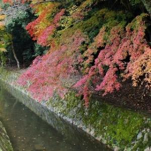 熊野若王子神社 哲学の道出発点 紅葉◎◎◎ 1位 京都府京都市左京区