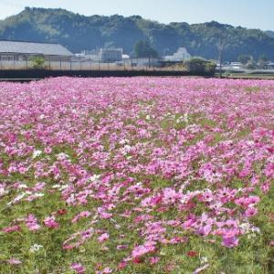 平等寺 写真撮影可能 四国八十八カ所 22番 徳島県阿南市