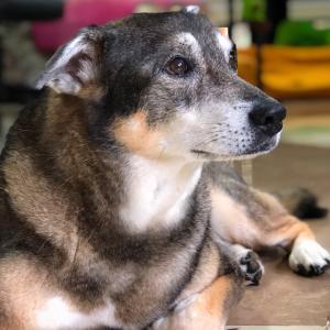 映画「エンツォ レーサーになりたかった犬とある家族の物語」