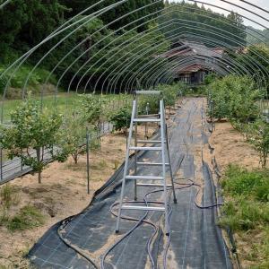 露地植えブルーベリー防鳥網設置 その1 (ハウス部材施設)