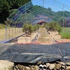 ブルーベリー畑への防草シート&排水パイプ施設