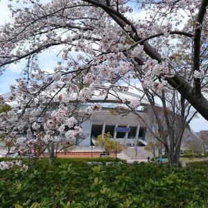 広島広域公園の桜ショット in 2019