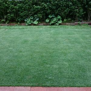 TM9芝生補植 (TM9張り替え2ヶ月後)