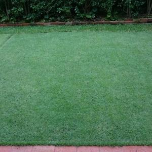 TM9芝生補植 (TM9張り替え4.5ヶ月後)
