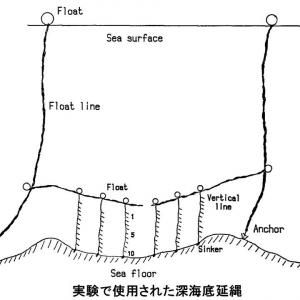 魚類の行動研究論文集の抄録 Studies on the Remaining Bait on Hooks in Deep-sea Bottom Longline