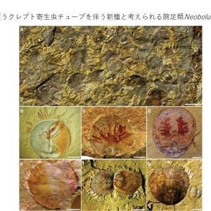 Nature トピックス; カンブリア紀初期のクレプト寄生虫-宿主相互作用の被覆