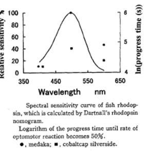 魚類の行動研究論文集の抄録 Study on Measurement of Spectral Sensitivity under Scotopic Conditions Using Optomotor Reaction in Fishes