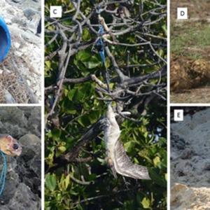 Nature トピックス; 小さな島国にとって海洋プラスチックごみの除去は多大な費用負担になる