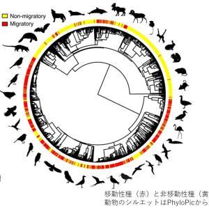 Nature トピックス; 渡り鳥や哺乳類は定住種よりも生活のペースが速い
