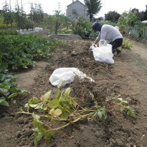 野菜作り 2021.8.14