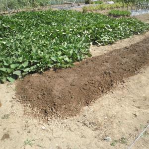 野菜作り 2021.8.21