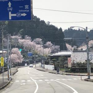 """徳島県国道438号<シダレサクラ街道をゆく>NO1 """"ゆうかの里"""""""