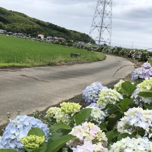どんよりした梅雨空に・・・・夏季ボーナス577万円だ!!