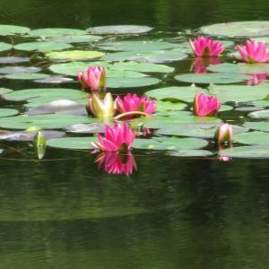 四国の片田舎に咲く歴史の花とは・・!??