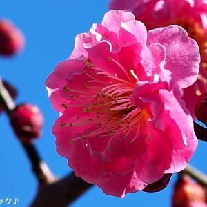 名曲百選第五章(17)遠い空に映る君にも 春の歌が聞こえる?