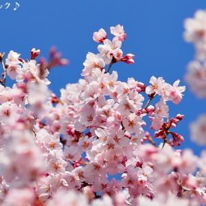 名曲百選第五章(20)咲き始めた桜と あなただけに聴こえる唄・・・