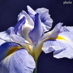 名曲百選第五章(30)雨に打たれた花のように  涙のキッス もう一度・・・