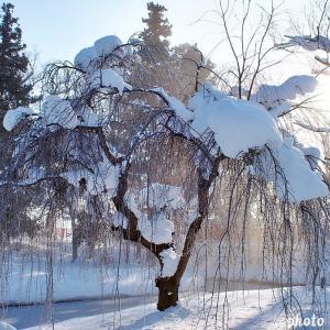 名曲百選第五章(61)冷たい雪の下で寒さにじっと耐える種こそが、春 美しい薔薇になれる