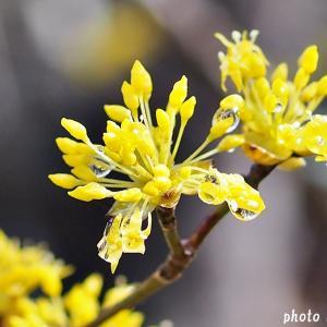 名曲百選第五章(69)心に春が来た日は 赤いスイートピー