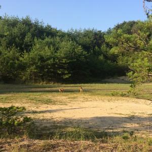 8月の鹿と蜂