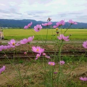 稲刈りはちょっと遅れて秋の空