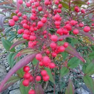 立冬の赤は真冬の白を呼ぶ