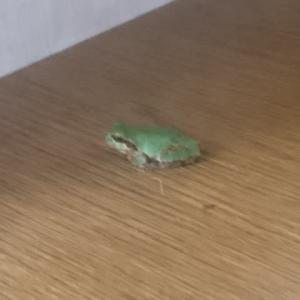 おはようとあいさつに来たカエルさん