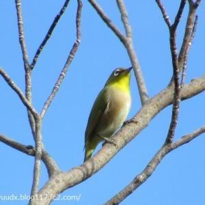 六種の野鳥に会えました【荒川自然公園】