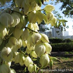 アツバキミガヨランが満開!十月桜にメジロ【荒川自然公園】