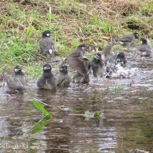 鳥が大はしゃぎ、土管ネコ、再び!!【尾久の原公園・北側スーパー堤防】