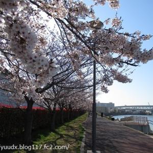 日刊スポーツPRESS王子工場~ほりふな健康ロード~隅田川テラスの景色【桜を見ながら、ぶらり散歩その4】