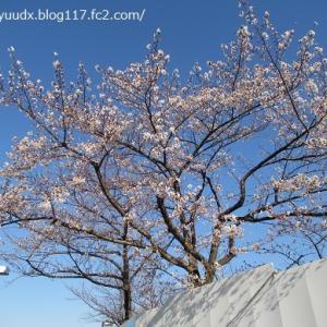 あらかわ遊園のリニューアル工事の進捗状況~隅田川にスズガモさん【桜を見ながら、ぶらり散歩その5】