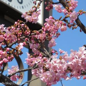 【荒川区荒川その1】荒川公園の梅の花と燈籠、荒川区役所前歩道橋